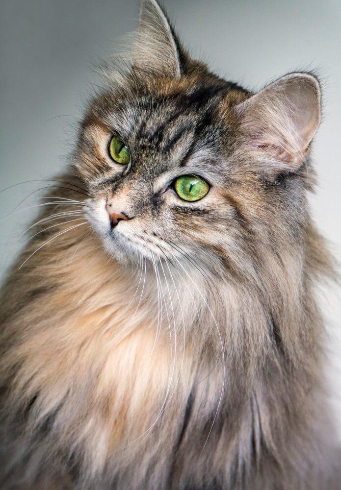 Nama Kucing 1