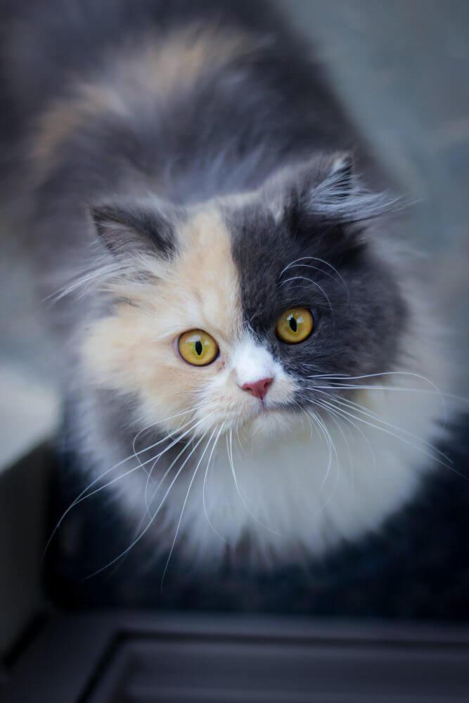 Nama Kucing 2