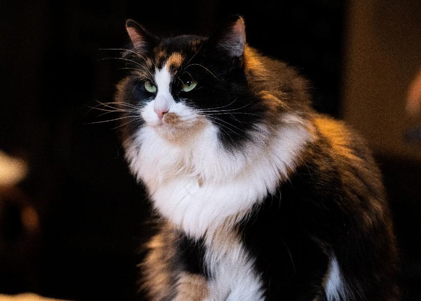 Nama Kucing 4