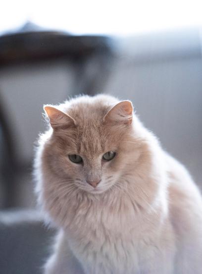 Nama Kucing 5