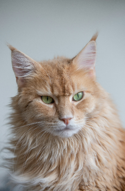 Nama Kucing Abjad A Z