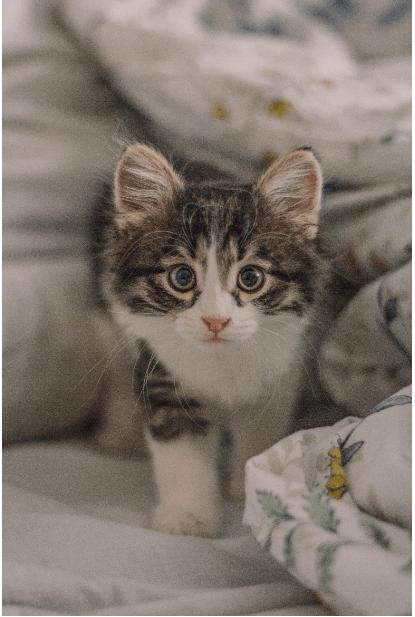 Nama Kucing Betina Bagus