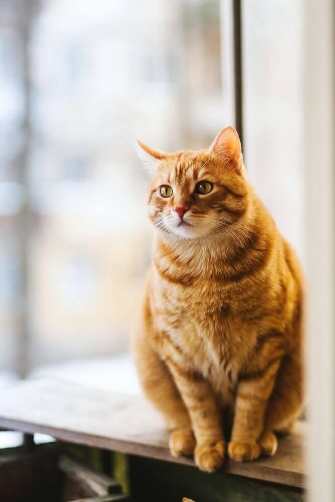 Nama Kucing Betina Korea
