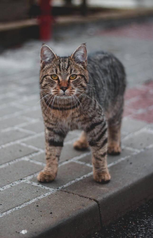Nama Kucing Jantan