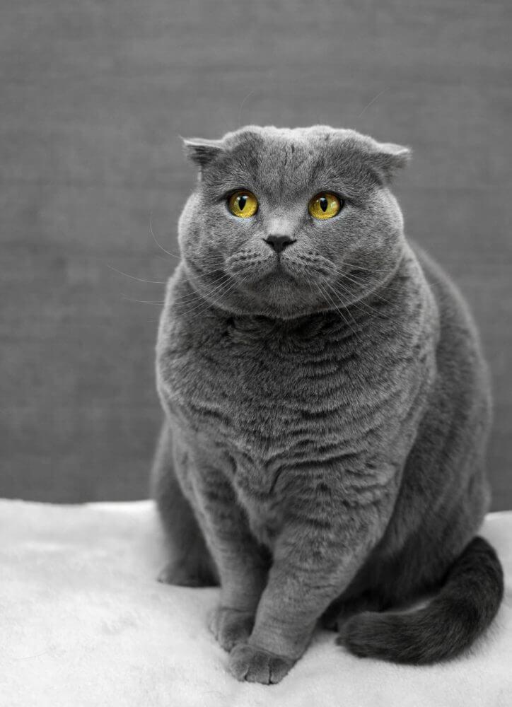 Nama Kucing Jantan Abu Abu