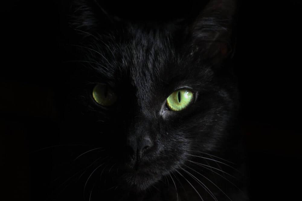 Nama Kucing Jantan Hitam