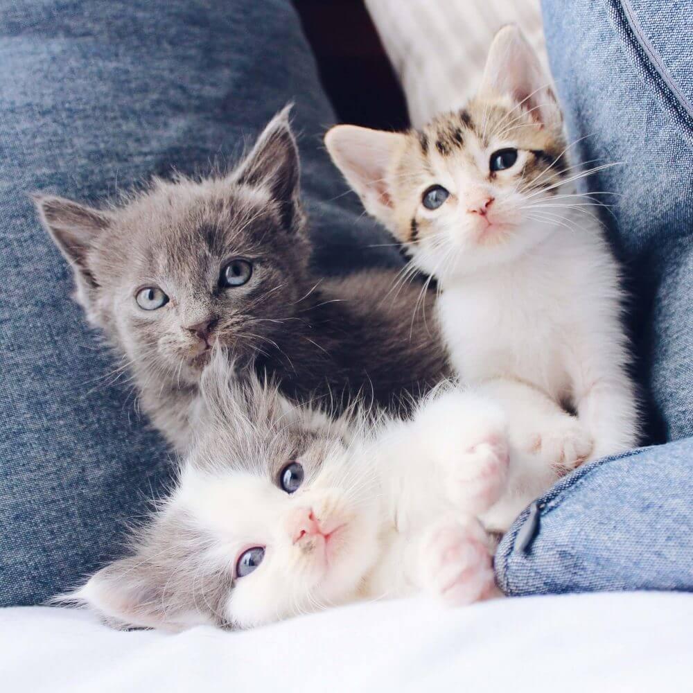 Nama Kucing Lucu dan Bagus 1