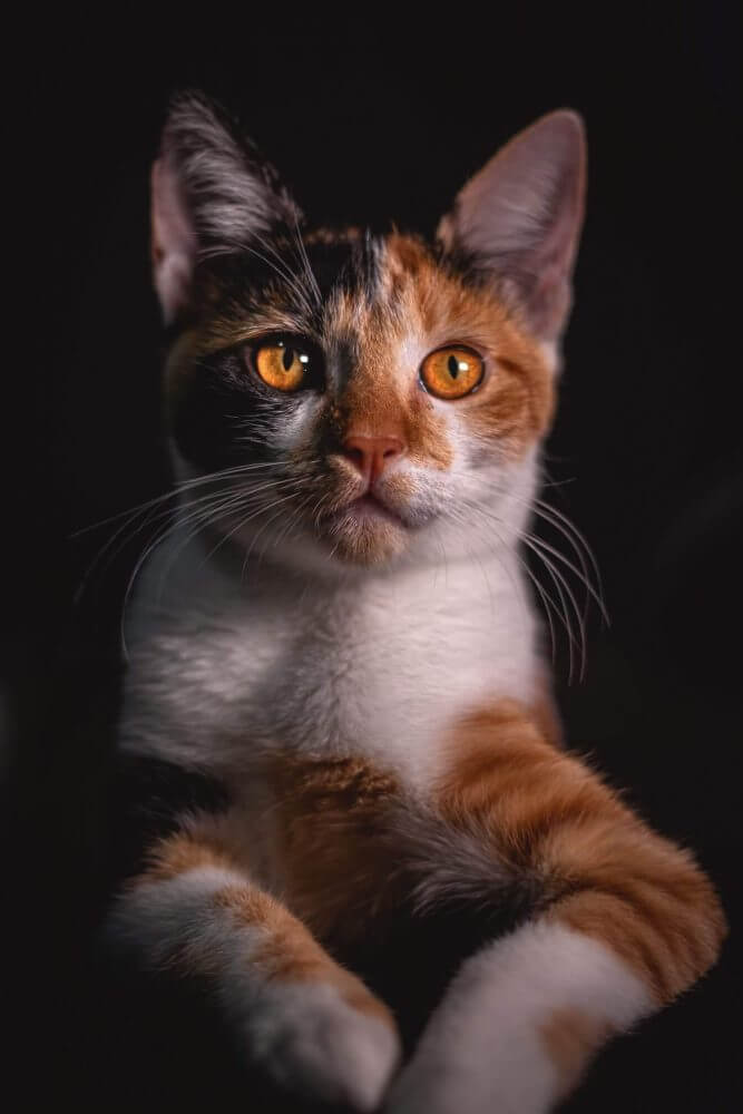 Nama Kucing Orange