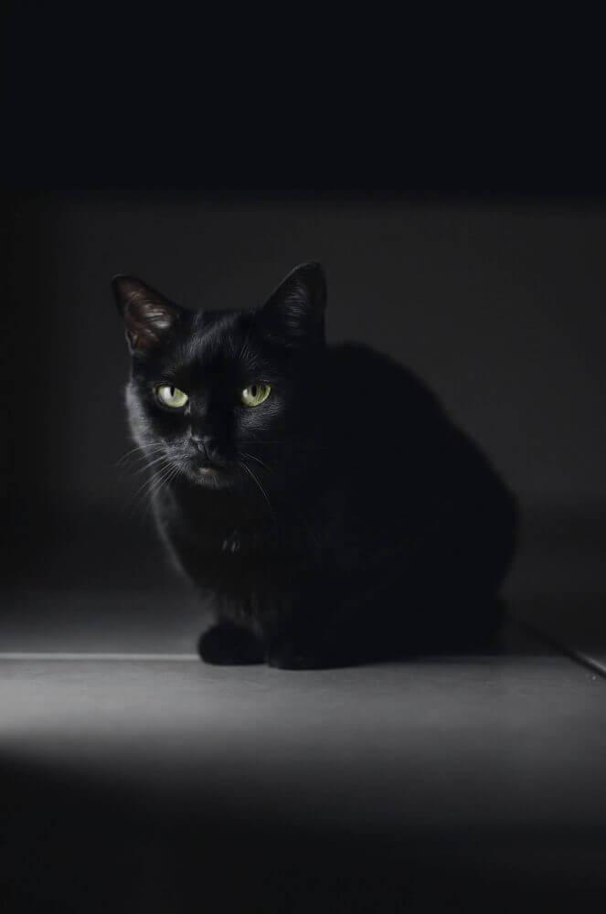 black cat on floor